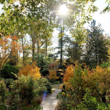 A burst of fall colors in the Ambler Arboretum