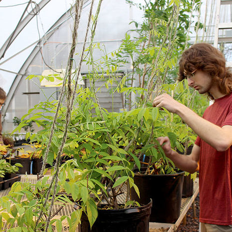 Flower Show 2020: Ungardening in the Ambler Campus Greenhouse