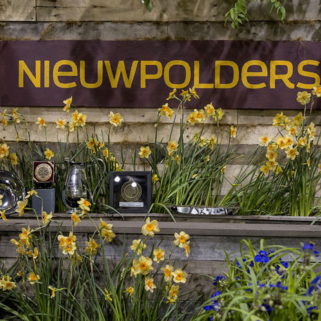 Nieuwpolders wins major awards at the 2017 Philadelphia Flower Show