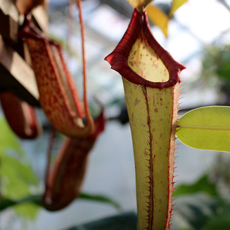 Ben Snyder: A Walk on the Weird Side of the Ambler Campus Greenhouse