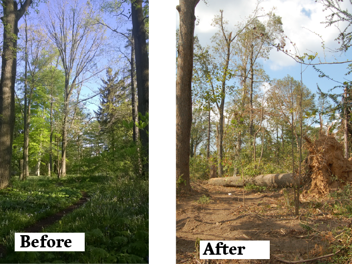 The Woodland Garden, before and after the tornado swept through campus