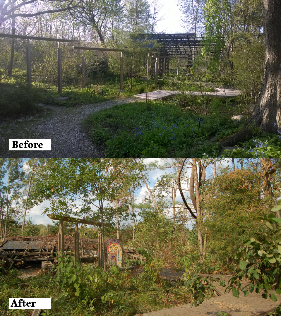 A before and after view of the Sustainable Wetland Garden.