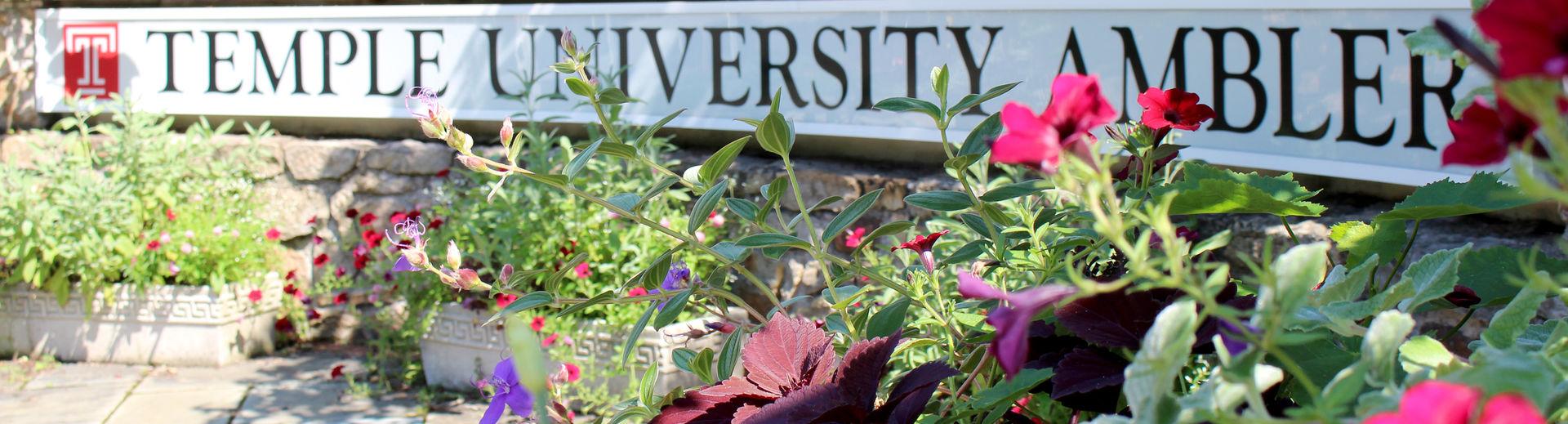 The Temple University Ambler Front Entrance
