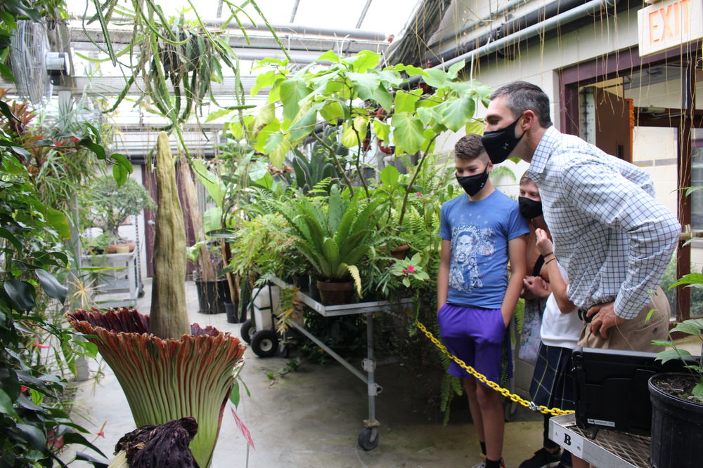 Viewing the corpse flowers at Temple Ambler