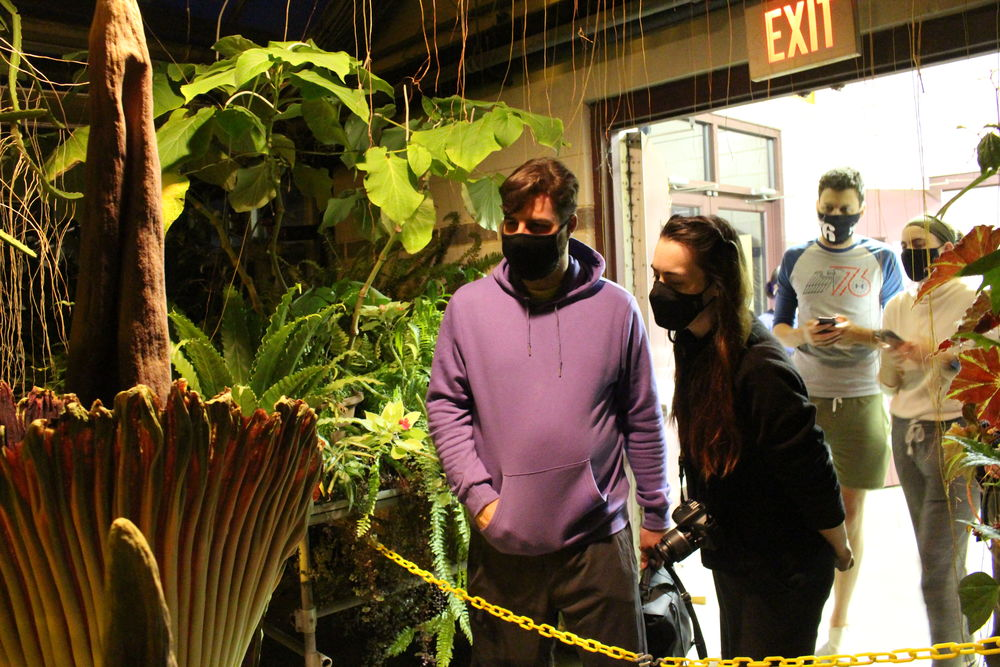 Viewing the corpse flowers