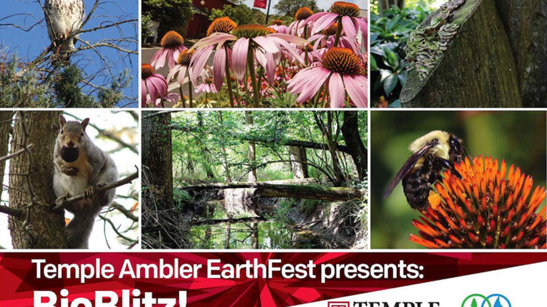 Take a walk on the wild side at Ambler Arboretum BioBlitz